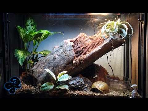 Reptile Room Tour December 2015 | Lizards, Snakes, Toads, and Inverts!