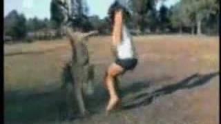 カンガルーの蹴りでノックアウト.
