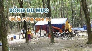 Cuộc sống du mục giữa rừng cao su Bình Phước