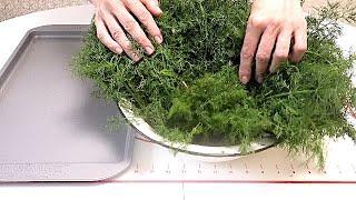 Заготовка зелени для специй. Укроп.