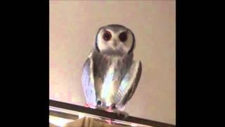 短い時間ですが、可愛い動物の動画を集めてみました。これからいろいろ...