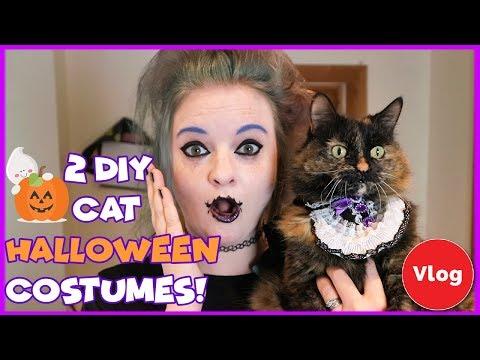 2 Easy DIY Halloween Costumes for Your Cat | DIY Cat Halloween | Easy DIY Cat Halloween Costumes