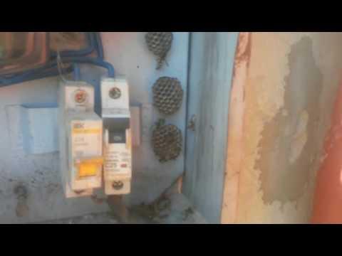 Как избавиться от ос  пчелы  дома
