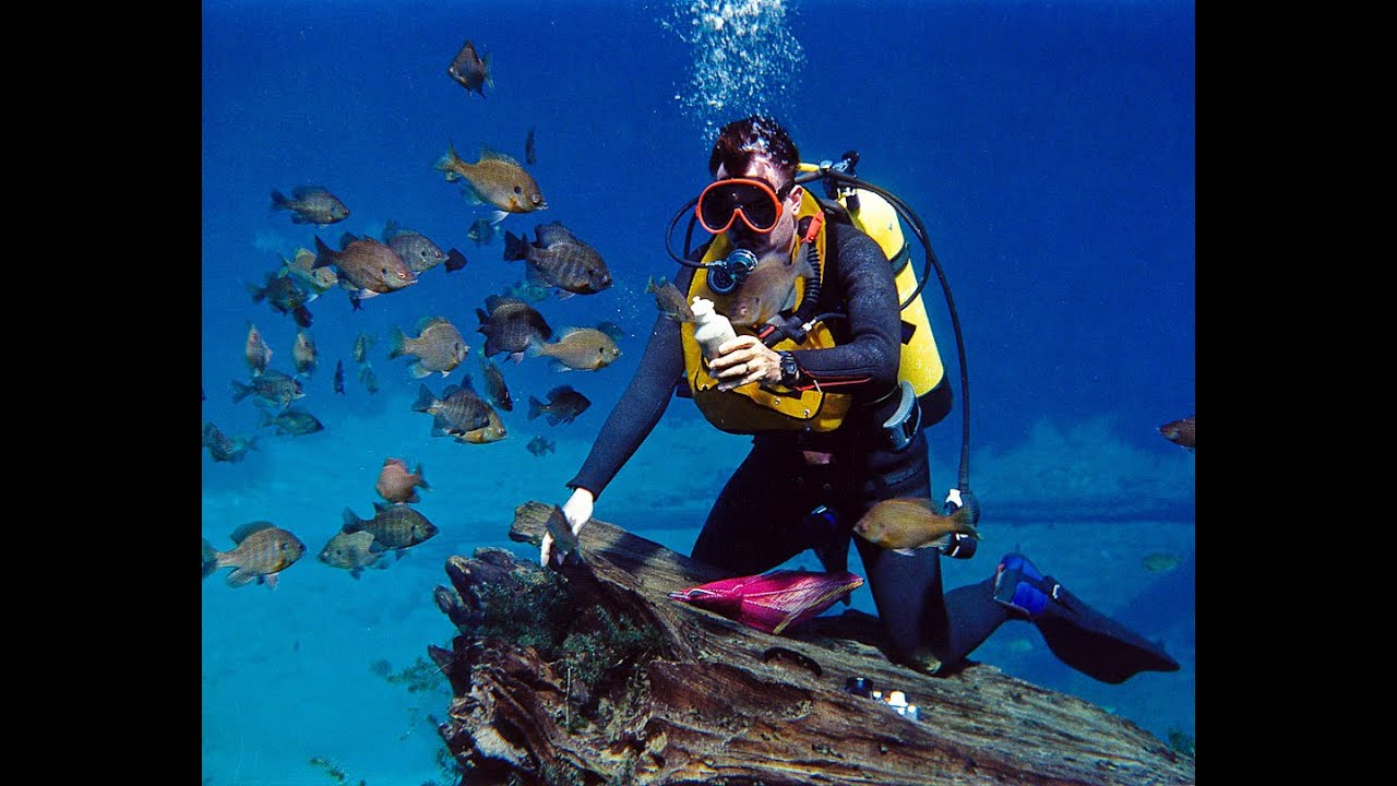 Wonderful Scuba Diving In Florida