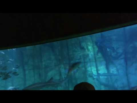 Fun times at Denver Aquarium(11)
