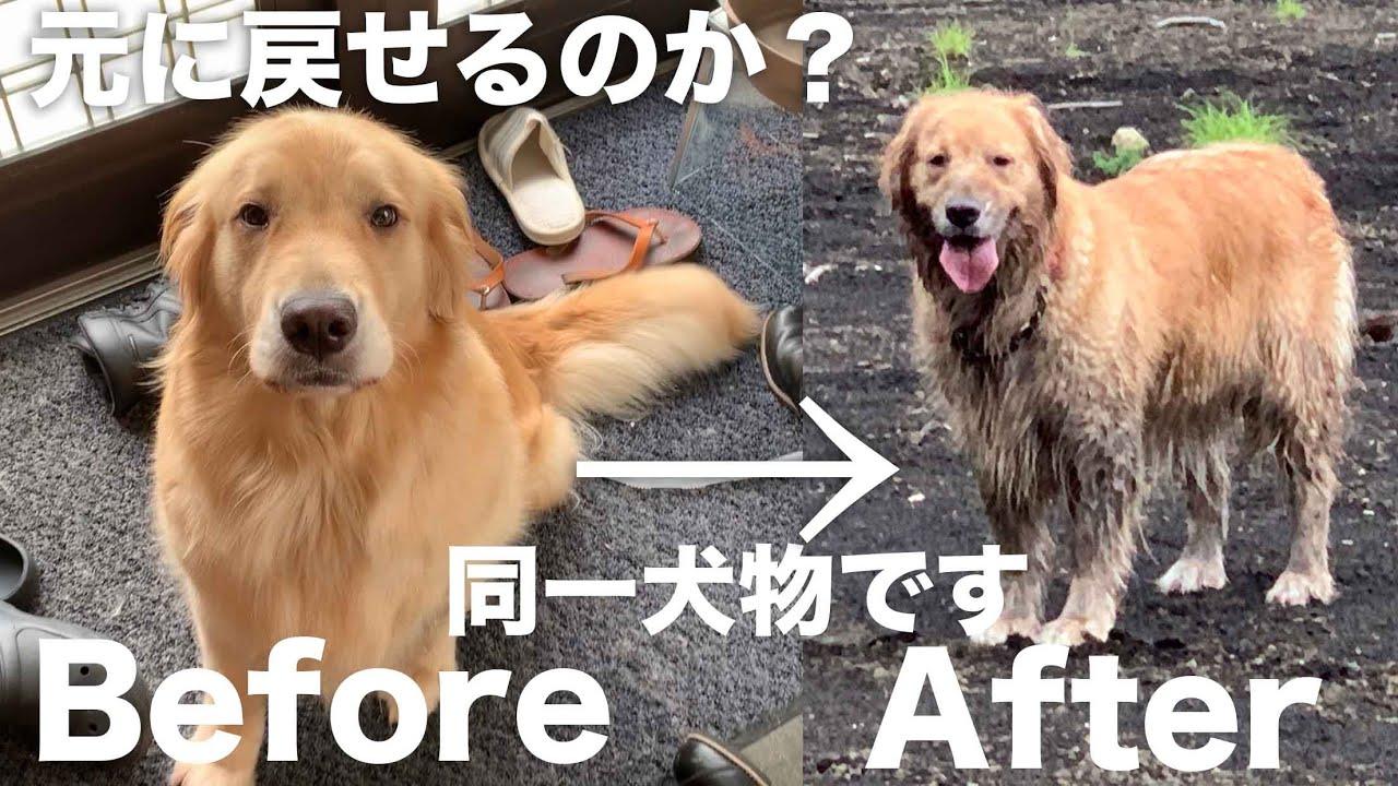 「大好き道志村(後編)」この人たち車に乗せたくないなぁ…→川へ皮を洗濯へ