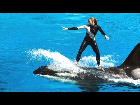 Amazing Show Of Killer Whale And Dolphin | Sea World | San Diego |