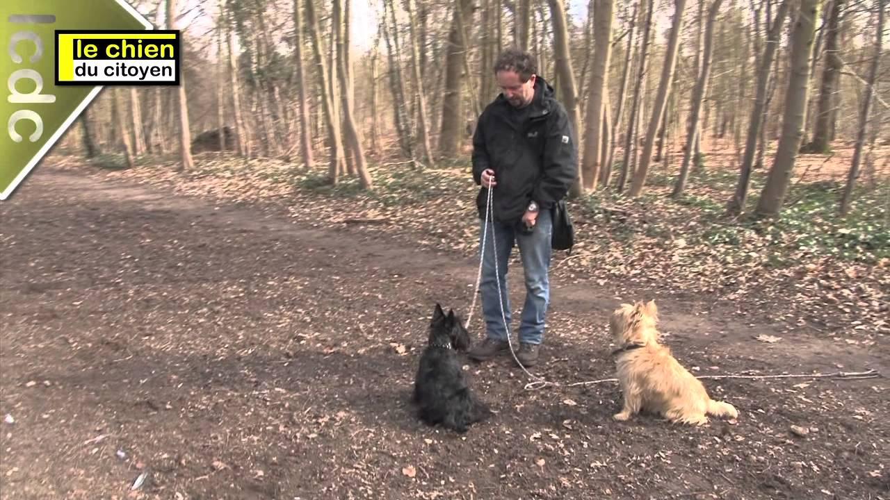Comment apprendre le rappel a son chien ? (partie 3) - YouTube