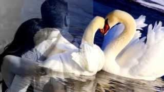 Владимир Захаров и Рок Острова Два белых лебедя