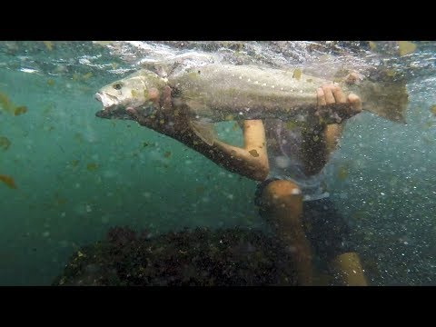 Rock Fishing For Mulloway!