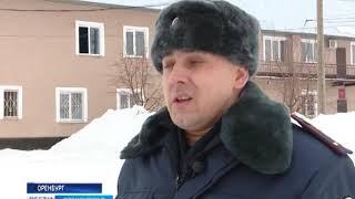 Кинологи рассказали оренбургским школьникам о работе служебных собак