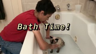 HOW TO GIVE A CAT THAT HATES WATER A BATH!