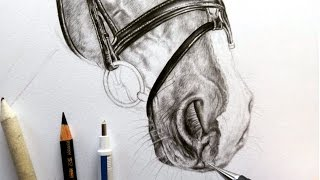 Drawing tutorial - How to draw a horse muzzle/nose | Leontine van vliet