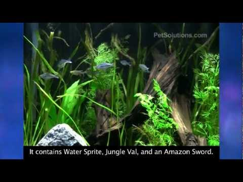 PetSolutions: Marineland Aquatic Plant LED Lighting System for Freshwater Aquariums