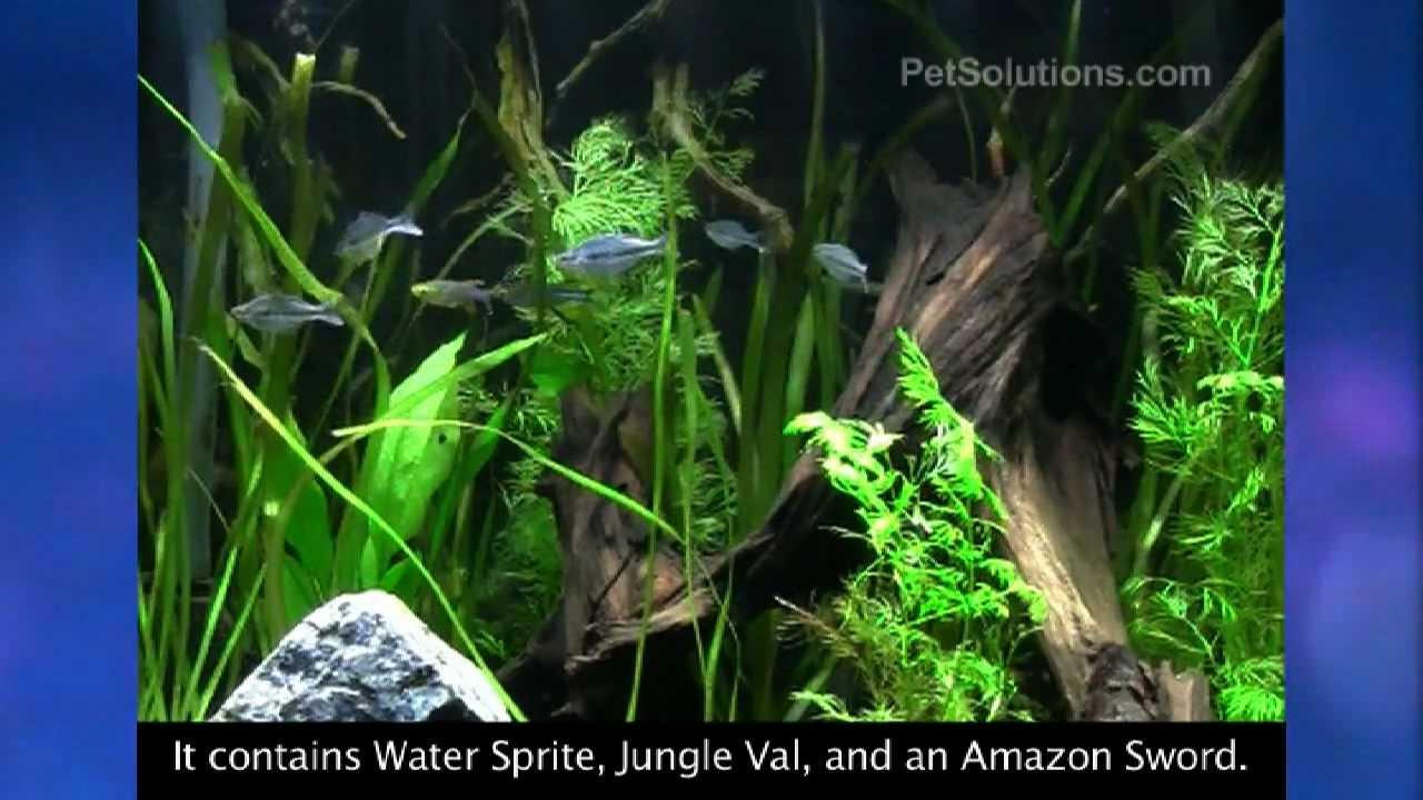 PetSolutions: Marineland Aquatic Plant LED Lighting System ...