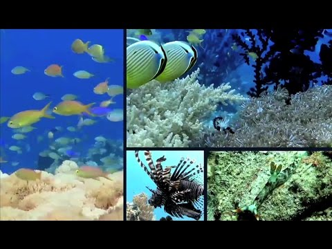 Philippines Coral Reef Riches, Preservation, Restoration & Coastal Cleanup