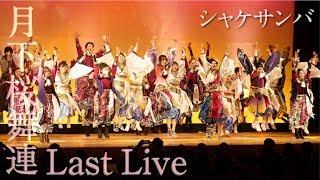 【月下桜舞連 公式】Last Live ⑨ ~シャケサンバ~