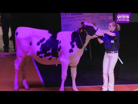 Confrontation Européenne Holstein - Colmar les 17, 18 et 19 Juin 2016