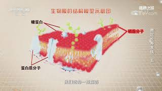 [健康之路]攒足长寿本钱(五) 脂肪  CCTV科教