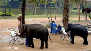 Шоу слонов в Thai Elephant Conservation Center