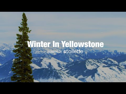 Winter in Yellowstone | Collette - USA Tours
