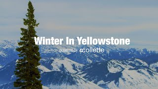 Winter in Yellowstone | Collette – USA Tours