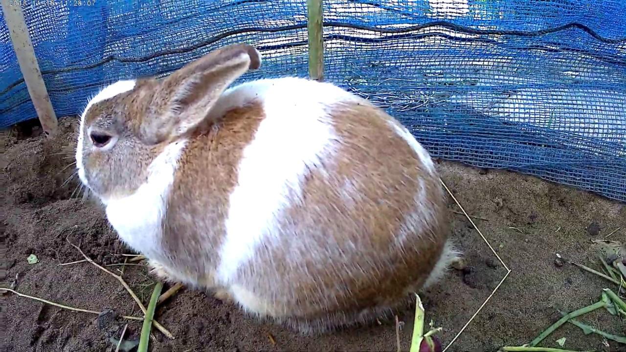 パンダ ウサギ