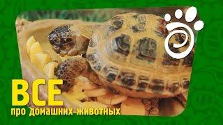 Правильный Уход Для Черепахи (Часть Третья).  Все О Домашних Животных