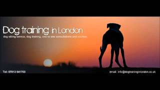 Dangerous Dogs Debate On Radio Five Live News With Nicky Campbell And Nigel Reed.wmv