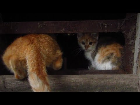 Kitten with mother hides in the basement