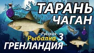 Тарань Чаган / РР3 [ Русская рыбалка 3.9 Гренландия].