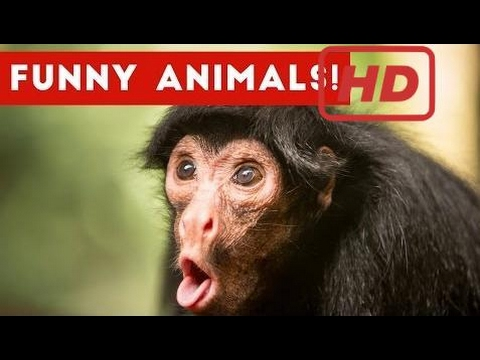 Funniest Pet & Animal Home Video Blooper Clip Compilation 2016 | Funny Pet Videos