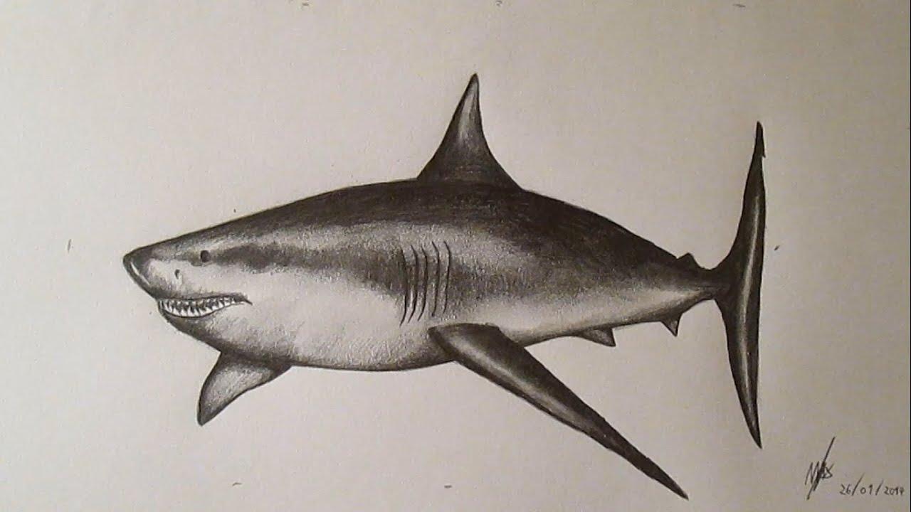 Cómo dibujar un tiburón blanco paso a paso a lápiz, How to Draw a ...