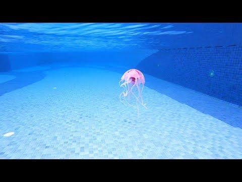 Jellyfish In My Swimming Pool