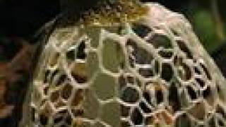 Yann Tiersen-first rendez-vous