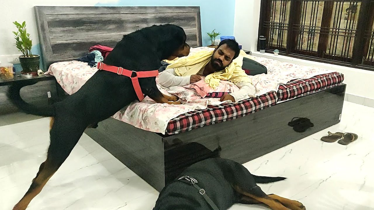 My Rottweiler wants to play at 3 o'clock at night || Mr.Nut & Mr.Bolt