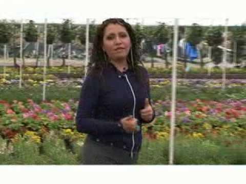 Viveros de cabrera en atlixco puebla youtube for Viveros de plantas en atlixco