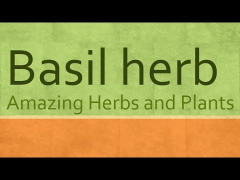 Health Benefits of Basil Herb - Basil Herb Health Benefits - Amazing Herbs and Plants