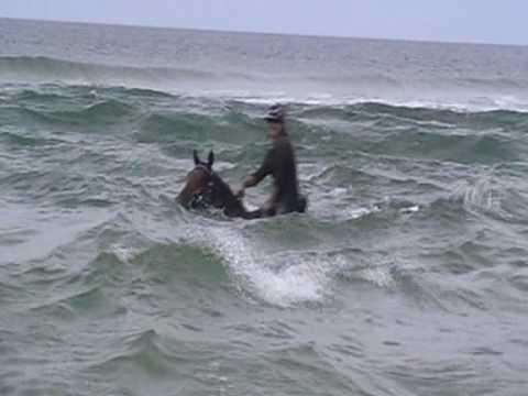 Horses Swimming At The Beach