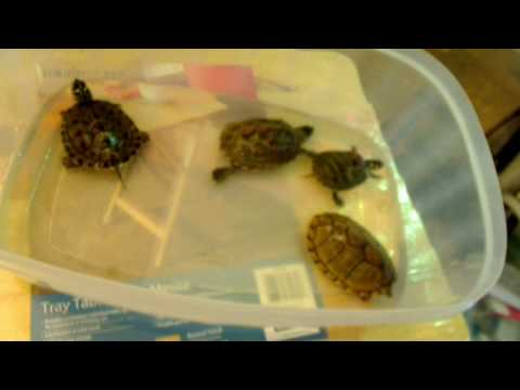 Before you buy a turtle watch this video!