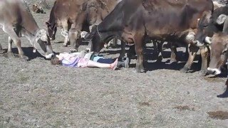 Playing with the Cows