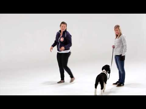 Dog Training: Tips for Polite Greetings (No jumping!)
