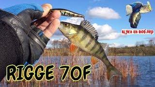 Як ловити на ZipBaits Rigge 70F щуку і окуня / Рибалка на щуку восени /ловля щуки навесні