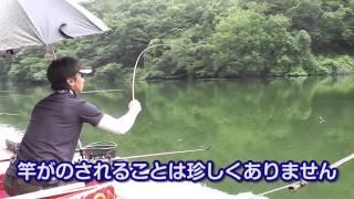 円良田湖でのへら鮒釣り 一発セット釣りで70枚! thumbnail