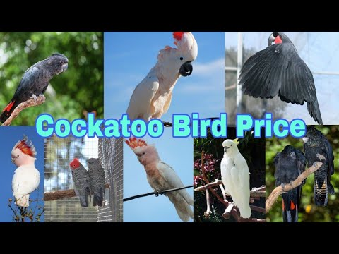 Top 12 Cockatoo Bird Price In India ( 2019 - 2020 )