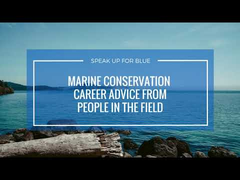 Marine Conservation Career Struggles: 4 Perspectives