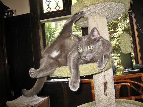 Zen And The Art Of Being A Cat