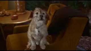 ANCHORMAN  THE LEGEND OF RON BURGUNDY (2004) FULL Baxter Scene, Woof :)