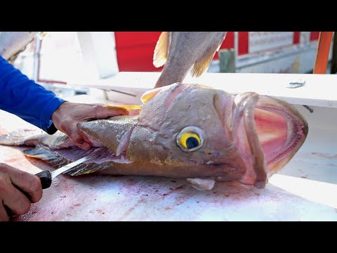 best-tasting-groupers-in-the-world-|-clean-n-cook