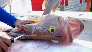 Best Tasting Groupers in the World  Clean N Cook